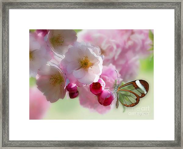 Spring Cherry Blossom Framed Print