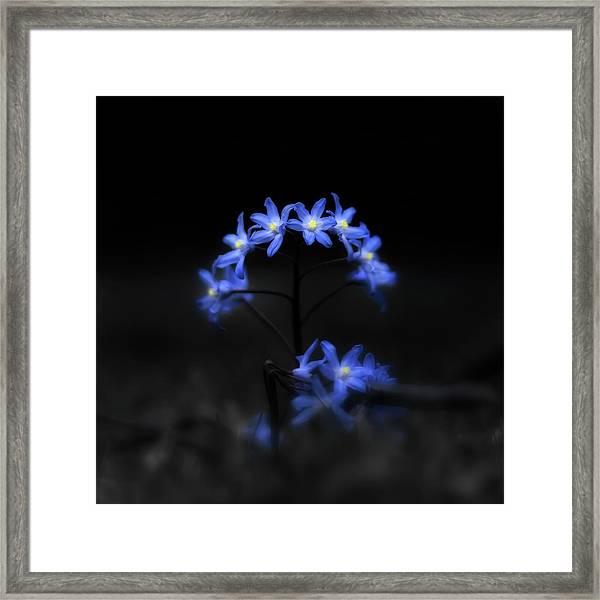 Spring Dance Framed Print