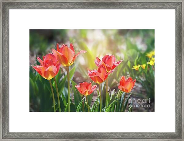 Spring Favorites Framed Print