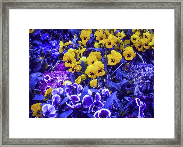 Framed Print featuring the photograph Spring Flowers - Bonn by Samuel M Purvis III