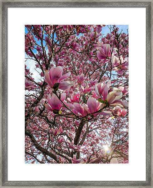Spring Fractals Framed Print