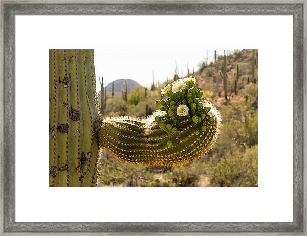 Spring In The Desert Framed Print