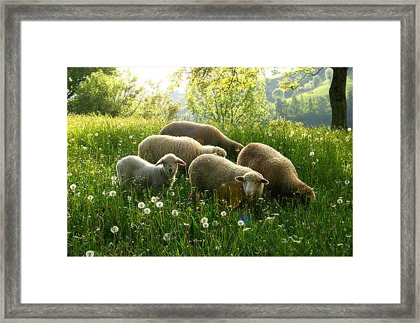 Spring In The Mountains Framed Print