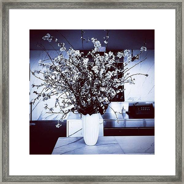 Spring Is Coming, Just Not Soon Enough Framed Print by Gina Callaghan