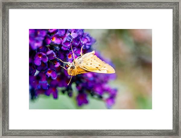 Spring Moth Framed Print