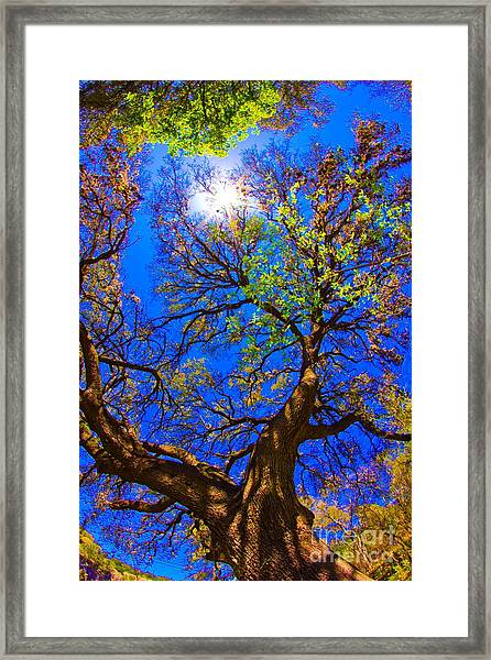 Spring Oak Framed Print