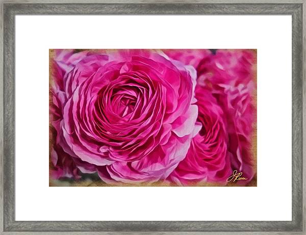 Spring Pink Roses Framed Print