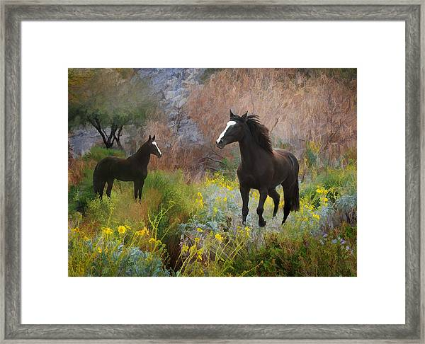 Framed Print featuring the photograph Spring Play by Melinda Hughes-Berland