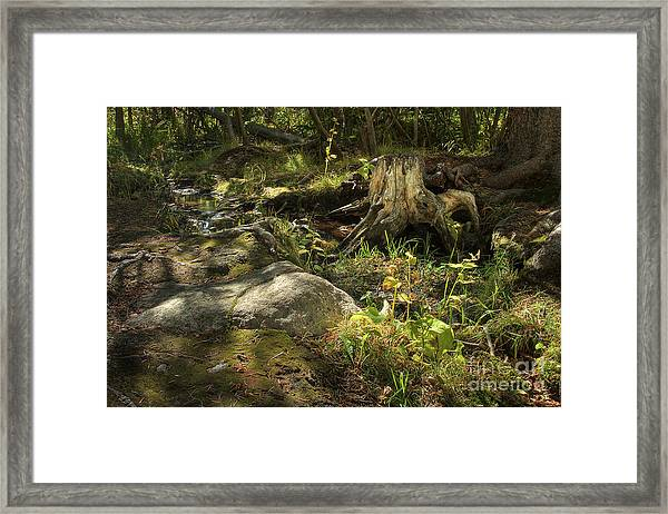 Spring Revealed Framed Print
