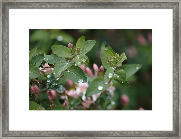 Framed Print featuring the photograph Spring Showers 5 by Antonio Romero