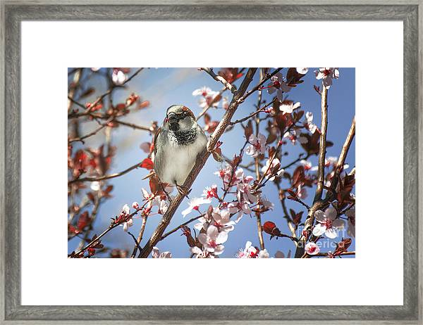Good Place For A Snack Framed Print
