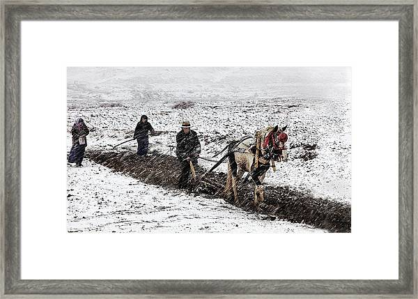 Spring Snow Framed Print by Bj Yang