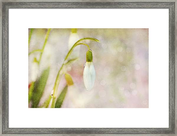 Spring Snowdrops And Bokeh Framed Print