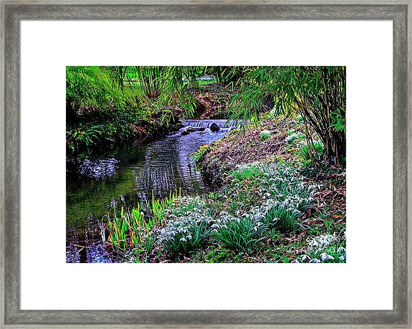 Spring Snowdrops By Stream Framed Print