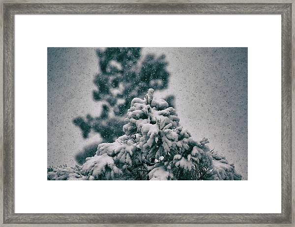 Framed Print featuring the photograph Spring Snowstorm On The Treetops by Jason Coward