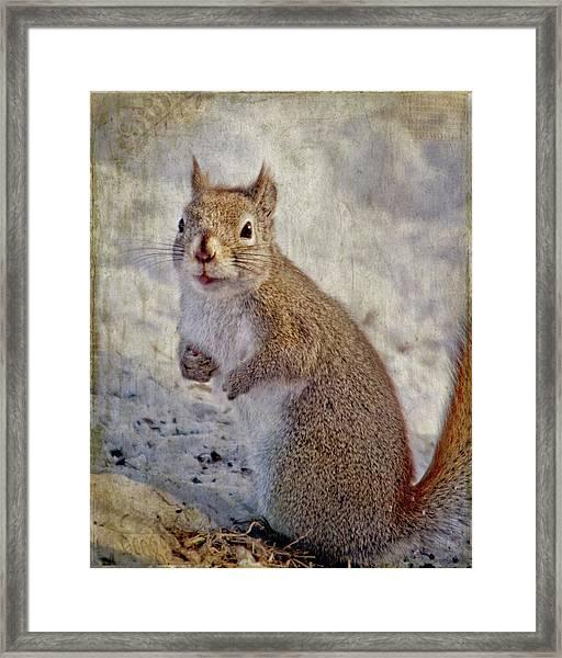 Spring Squirrel Framed Print