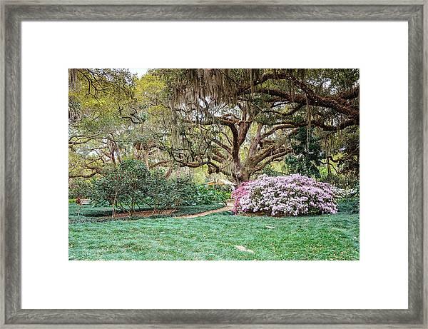 Spring Azaleas In Florida Framed Print