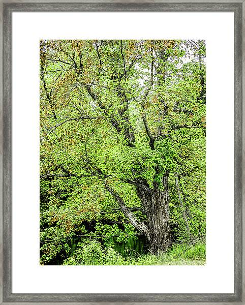 Spring Time By The River Framed Print