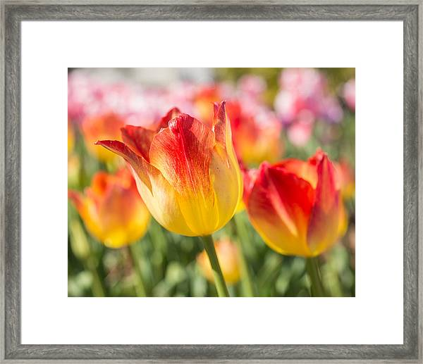 Spring Touches My Soul Framed Print