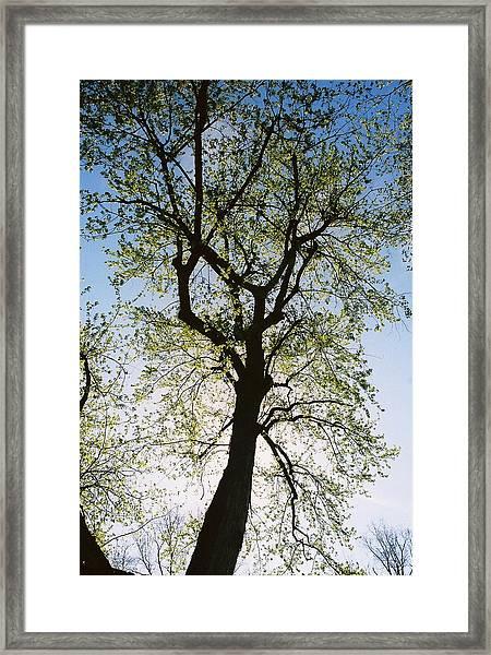 Spring Tree Framed Print by Patrick Murphy