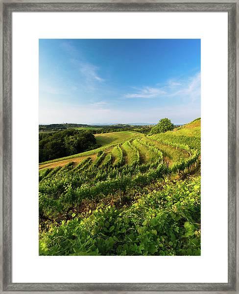Spring Vinyard Framed Print