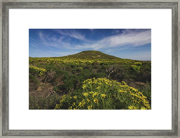 Spring Wildflowers Blooming In Malibu Framed Print