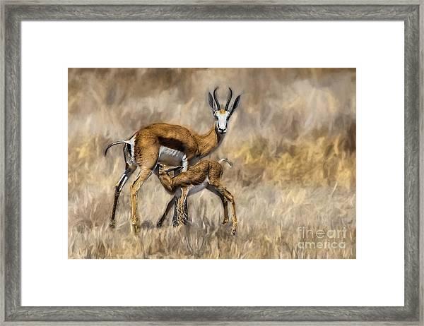 Springbok Mom And Calf Framed Print