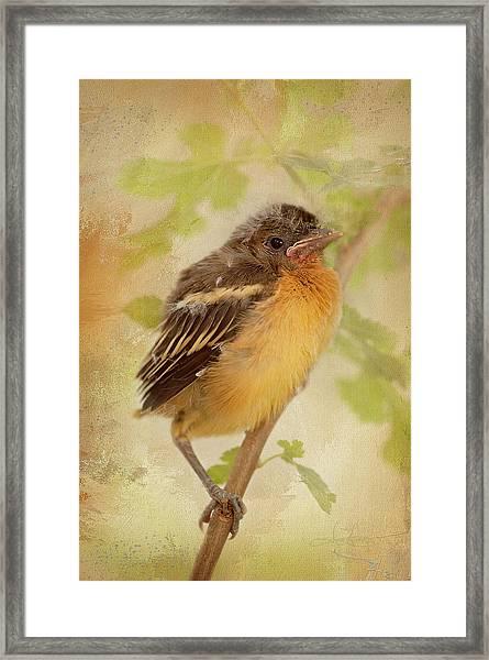 Spring's Sweet Song Framed Print