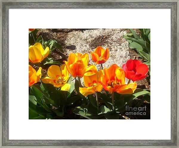 Framed Print featuring the photograph Springtime Flowers by Rachel Maynard