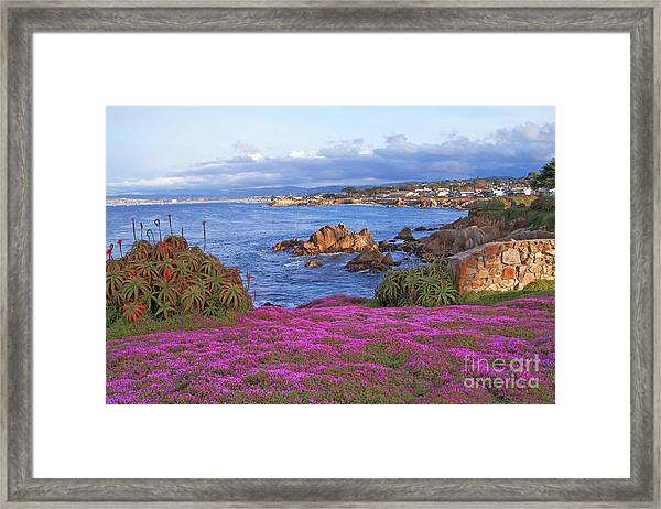Springtime In Pacific Grove Framed Print