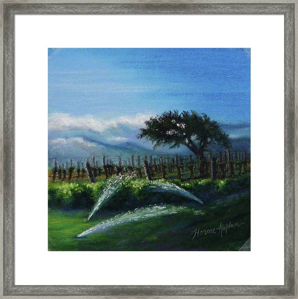 Sprinklers At Pre Dawn Framed Print