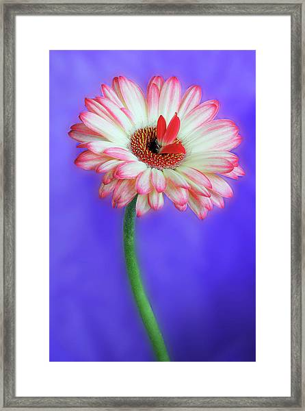 Sprouting Dahlia Framed Print