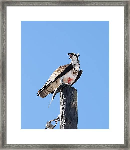 Squawk  Framed Print
