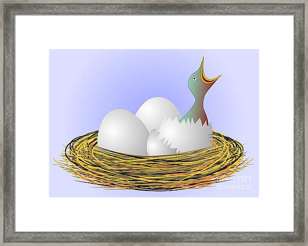 Squeaker Hatching From Eggs Framed Print