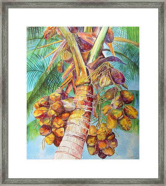 Squire's Coconuts Framed Print