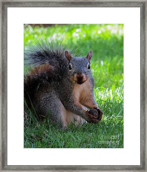 Squirrel 2 Framed Print