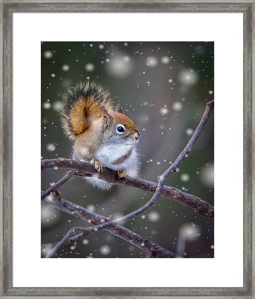 Framed Print featuring the photograph Squirrel Balancing Act by Patti Deters