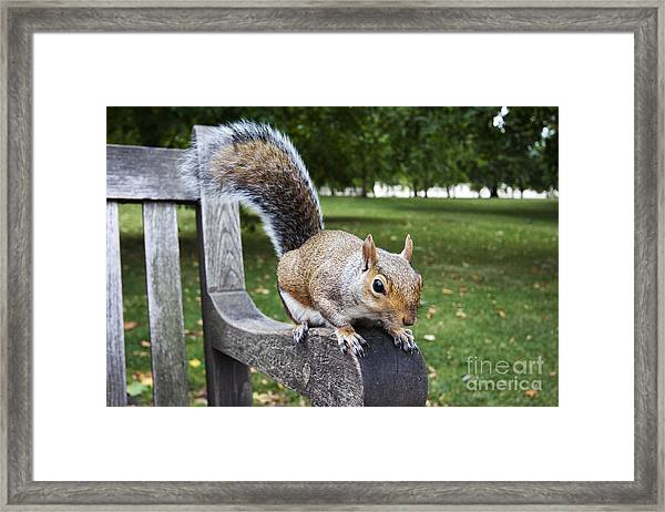 Squirrel Bench Framed Print