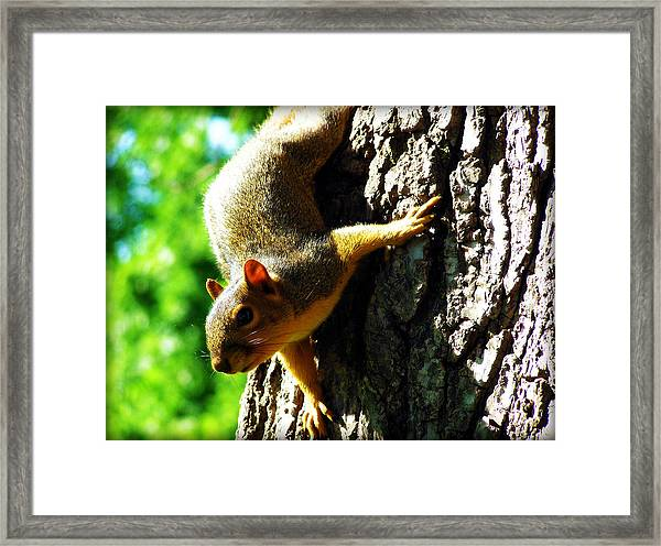 Squirrel Contact Framed Print