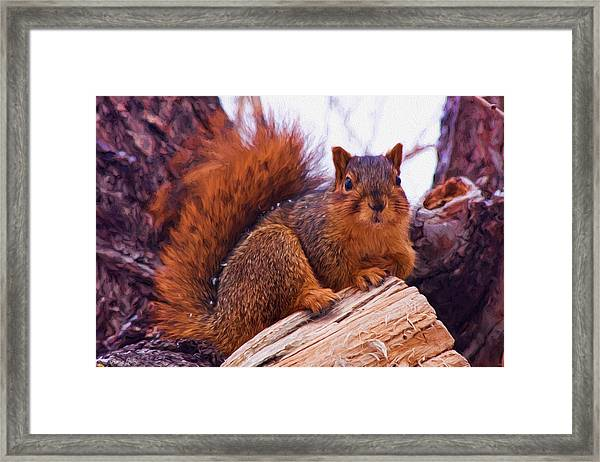Squirrel In Tree Framed Print