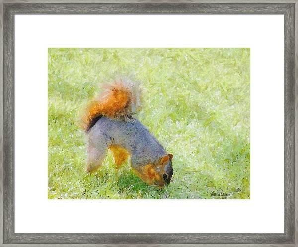 Squirrelly Framed Print
