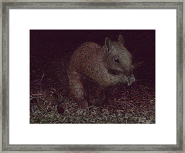 Squirrely Art Framed Print