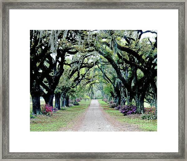 St Francisville Plantation Framed Print
