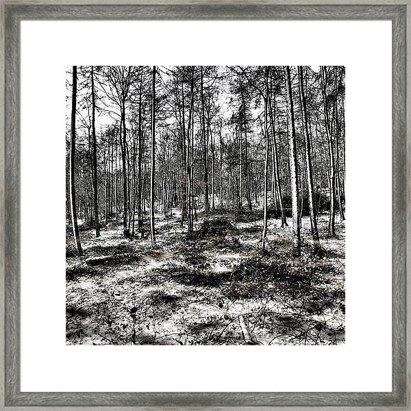 St Lawrence's Wood, Hartshill Hayes Framed Print