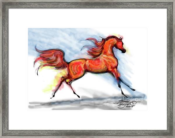 Staceys Arabian Horse Framed Print