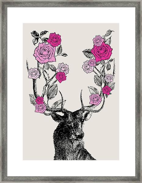 Stag And Roses Framed Print