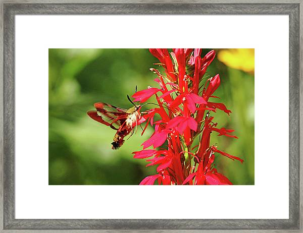 Stained Glass Wings Framed Print