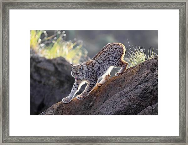 Stalking At Sunset Framed Print