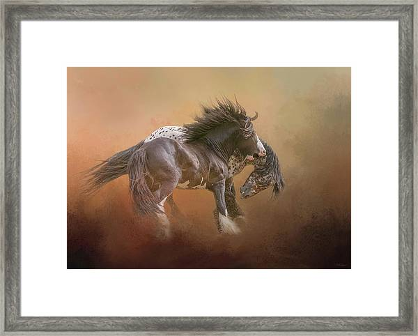 Stallion Play Framed Print