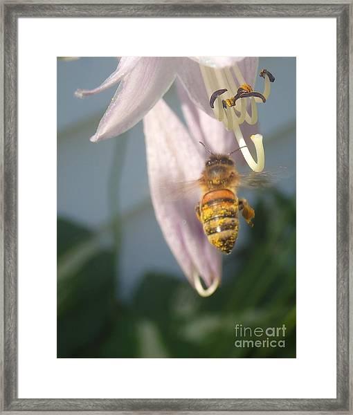 Stamen Attraction Framed Print